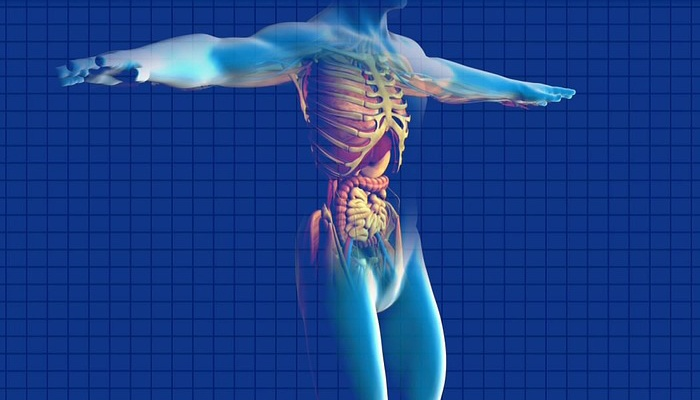 Photo of O segredo para uma vida com vitalidade está em remover essa obstrução tóxica do corpo