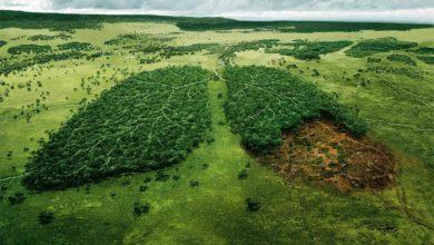 Photo of As soluções climáticas são óbvias – mas o lucro e a política estão no caminho